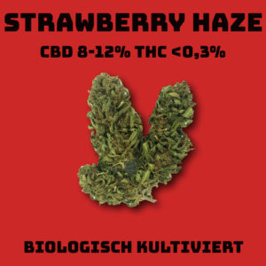 CBD Blüten Strawberry Haze